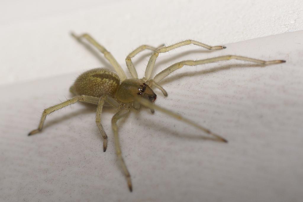 spinnenarten in deutschland